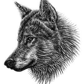 Wolf ink illustration portrait by Loren Dowding