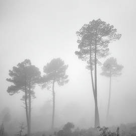 Wonderful forest. Foggy morning..... S. Huetor Natural Park. BW. Square by Guido Montanes Castillo