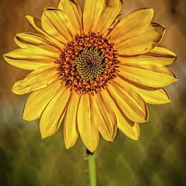 Wonderful Sunflower by Robert Bales