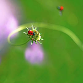 Wonders of nature 1 - Insects of Catalonia, Spain by ParaKrytous P