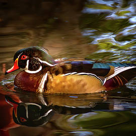Wood Duck by Mark Andrew Thomas
