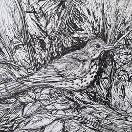 Wood Thrush by Kendall Kessler