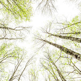 Wood You Look Up Please by Garth Steger