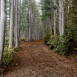 Wooded Path by Rick Yenofsky