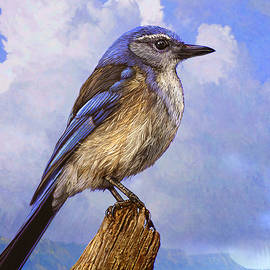 Woodhouse Scrub-jay At Mesa Verde by R christopher Vest