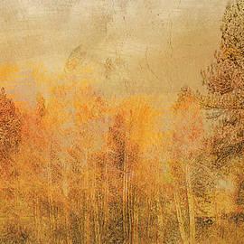 Woodland ... by Judy Foote-Belleci