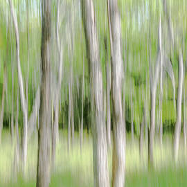 Woodland Abstract by Andrew Wilson
