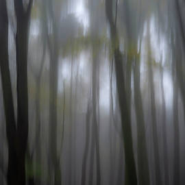 Woodland Dream by Clive Beake