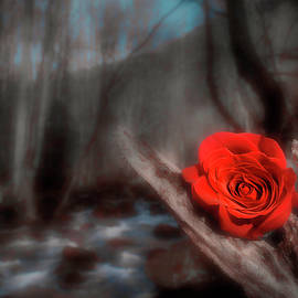 Woodland Rose by Jim Love