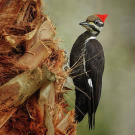 Woodpecker Eye to Eye - 7992 by Marvin Reinhart