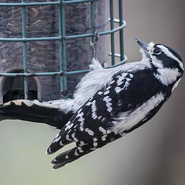 Woodpecker by Kailey MarcAurele