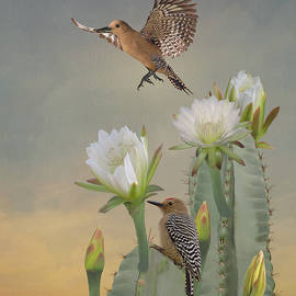 Woodpeckers and Cactus Flowers by Spadecaller
