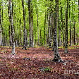 Woods in Amiata Mountain in spring season, Tuscany by Beautiful Things