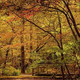 Woodsy Autumn by Mary Ann Artz