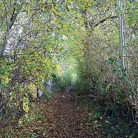 Woody Autumn path, York by Paul Boizot