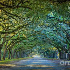 Wormsloe Oak Avenue by Inge Johnsson
