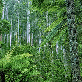 Yarra Ranges Forest by Bette Devine