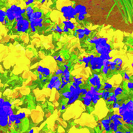 Yellow and Purple Petunias by Lindley Johnson