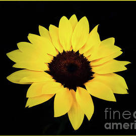 Yellow beauty by Chris Bee Photography