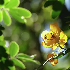 Yellow Brightness by Maryse Jansen
