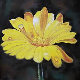 Yellow chamomile by Tigran Movsisyan