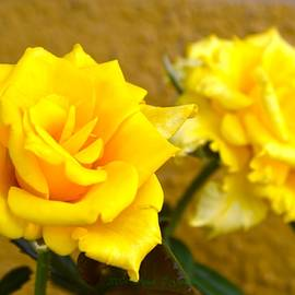 Yellow Crossing by Sonali Gangane