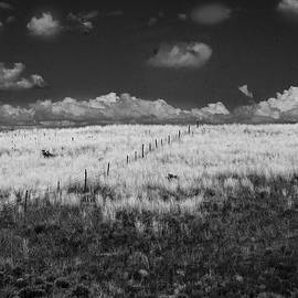 Yellow Field in New Mexico by Yuri Lev