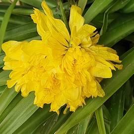 Yellow flower  by Abedalrahman Samara