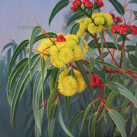 Yellow Gumblossoma by Fiona Craig