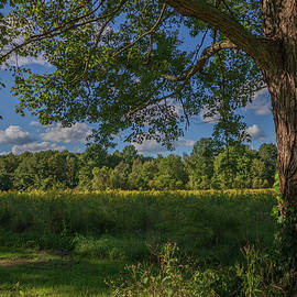 Yellow Meadow by Gavin Esposito