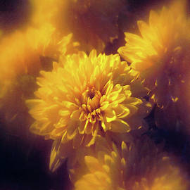 Yellow Mum's Close Up by Bill Tincher