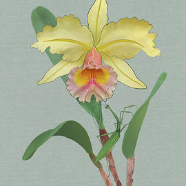 Yellow Orchid and Mantis by M Spadecaller