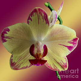 Yellow Orchid Phalaenopsis  by Gary F Richards