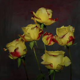Yellow Roses With Red Tips 3 by Isabela and Skender Cocoli