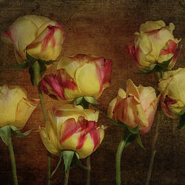 Yellow Roses With Red Tips by Isabela and Skender Cocoli