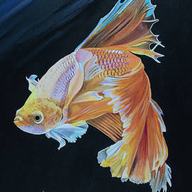 Yellow Siamese Betta Fish by Bill Dunkley