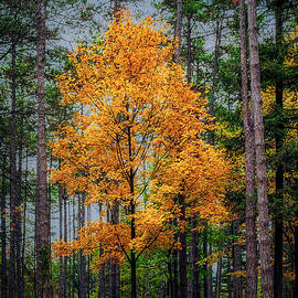 Yellow tree in the forest by Dejan Travica