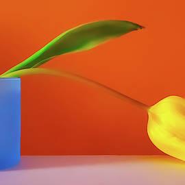 Yellow Tulip Still Life by Joan Han