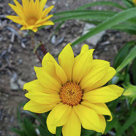 Yellow Wild Flower by Dipali Shah
