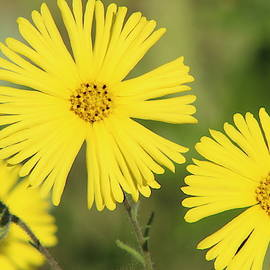 Cheerful Yellow Wildflower by Brian Baker