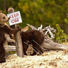 Yellowstone Junior Rangers by Adam Jewell
