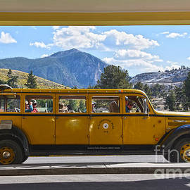 Yellowstone Yellow Bus by Catherine Sherman