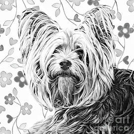 Yorkshire Terrier by Tina LeCour