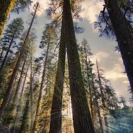 Yosemite Trail Evening by Matt Hammerstein