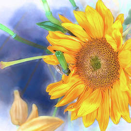 You Are My Sunshine by Jim Love