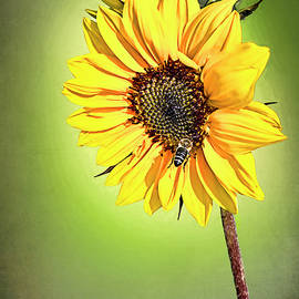You Are My Sunshine by Marcia Colelli