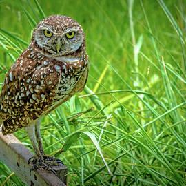 You Lookin' At Me? by Debra Kewley
