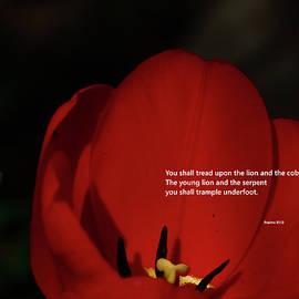 You Shall by Dennis Burton