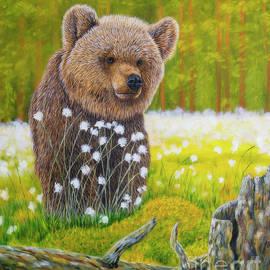 Young bear by Veikko Suikkanen
