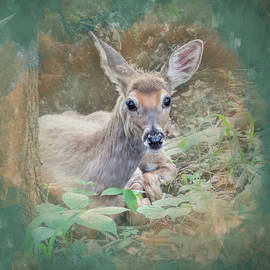 Young Deer at Rest by Patti Deters